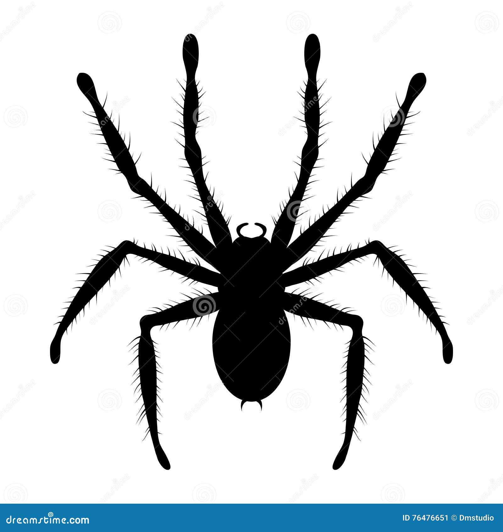 Araña de la tarántula ilustración del vector. Ilustración de ...