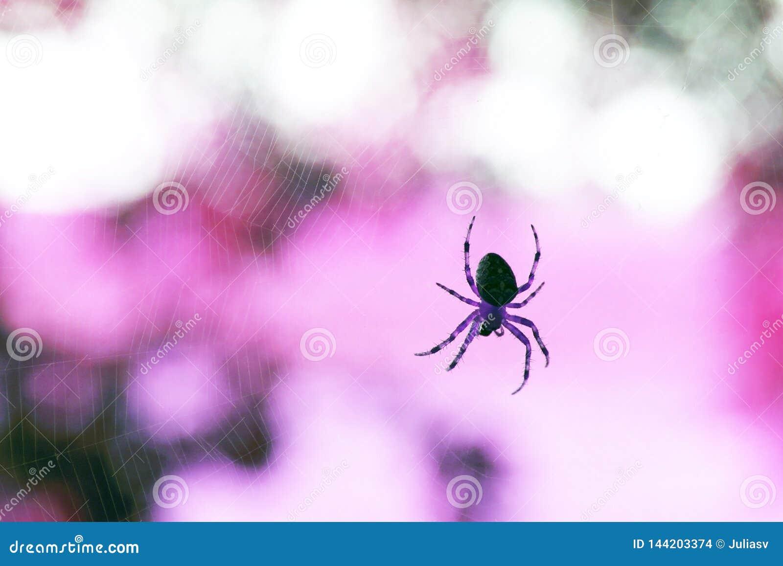 Araña depredadora sola en la web real en el fondo de la naturaleza