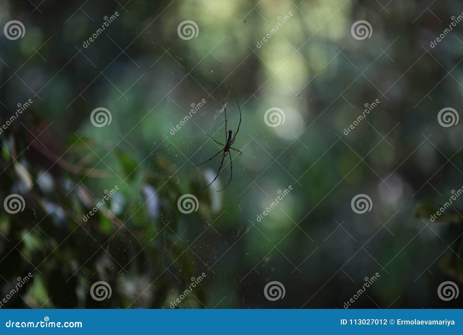 Araña en el web sobre fondo verde borroso del bosque