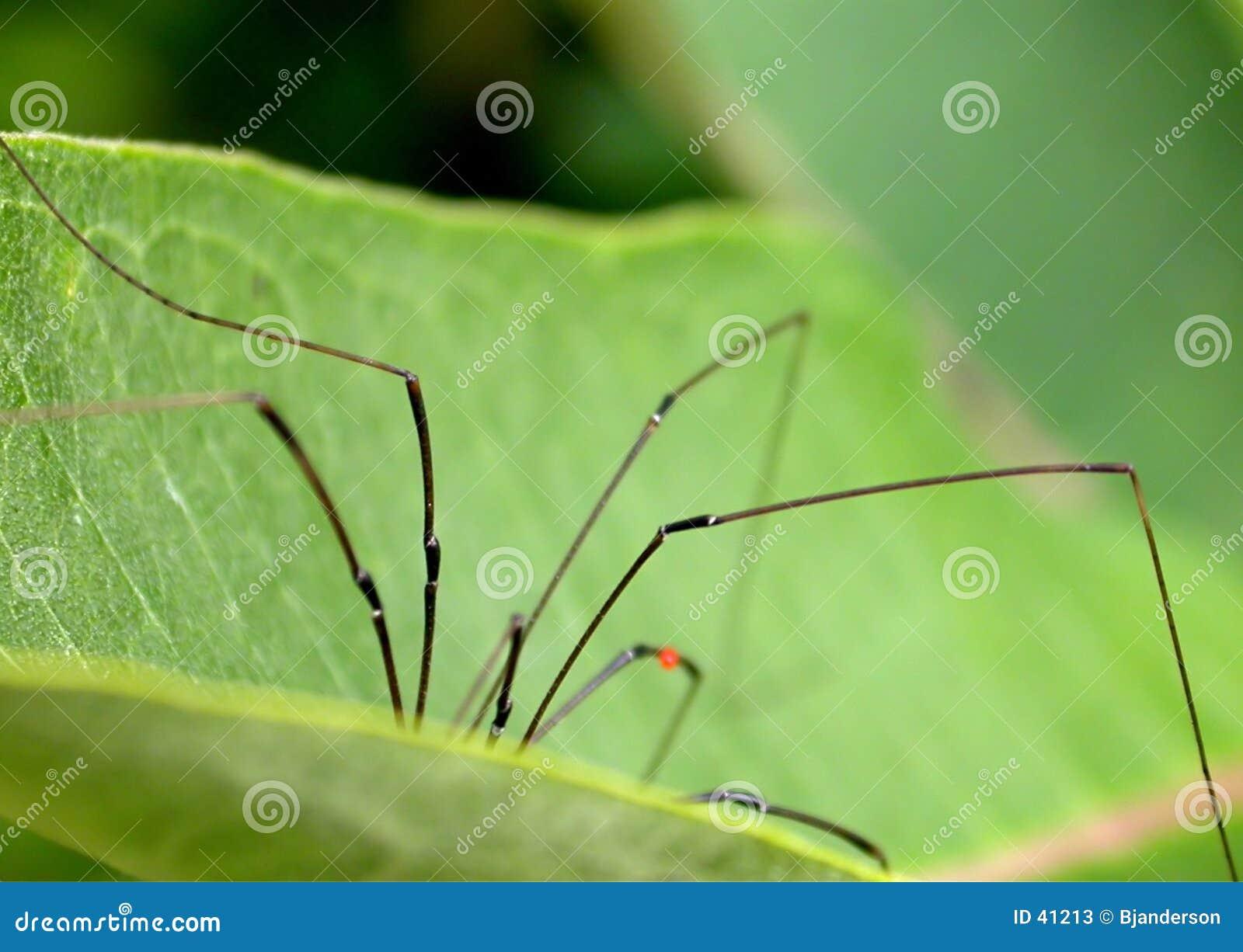 Download Araña en la hoja imagen de archivo. Imagen de verde, crawly - 41213