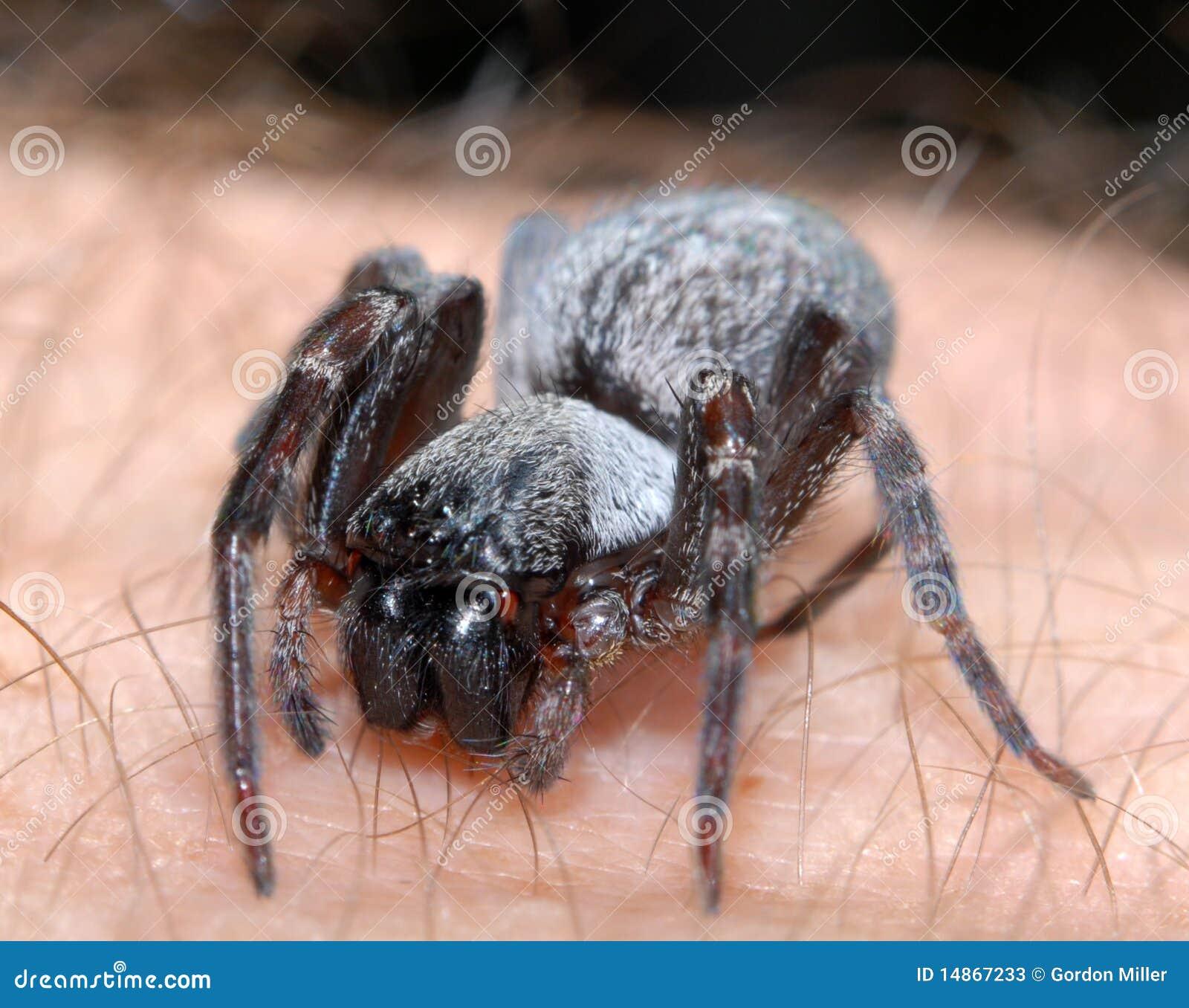 Araña en la mano