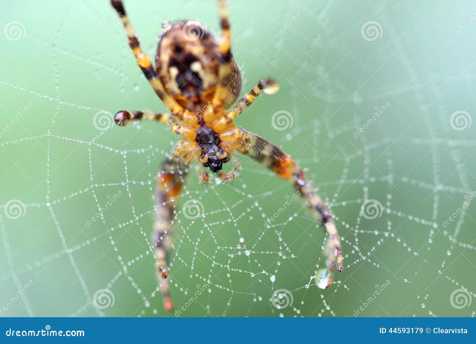 Araña en una macro del web