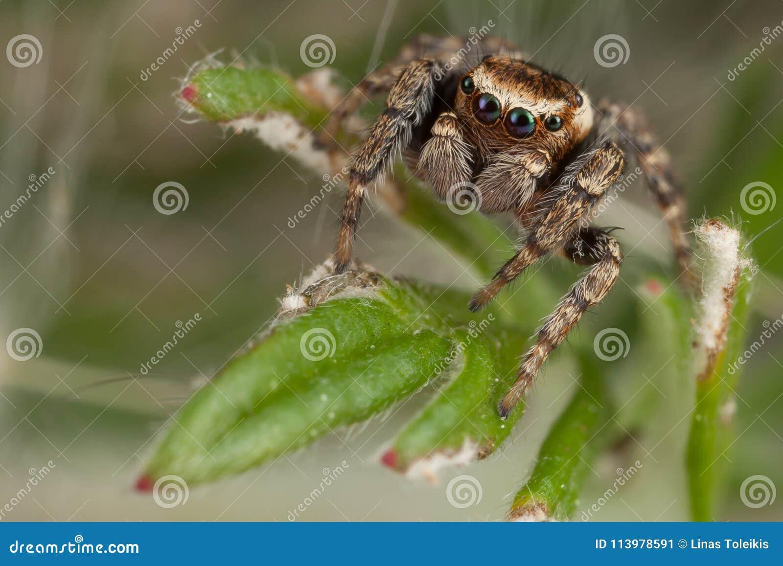 Araña que camina en la hoja