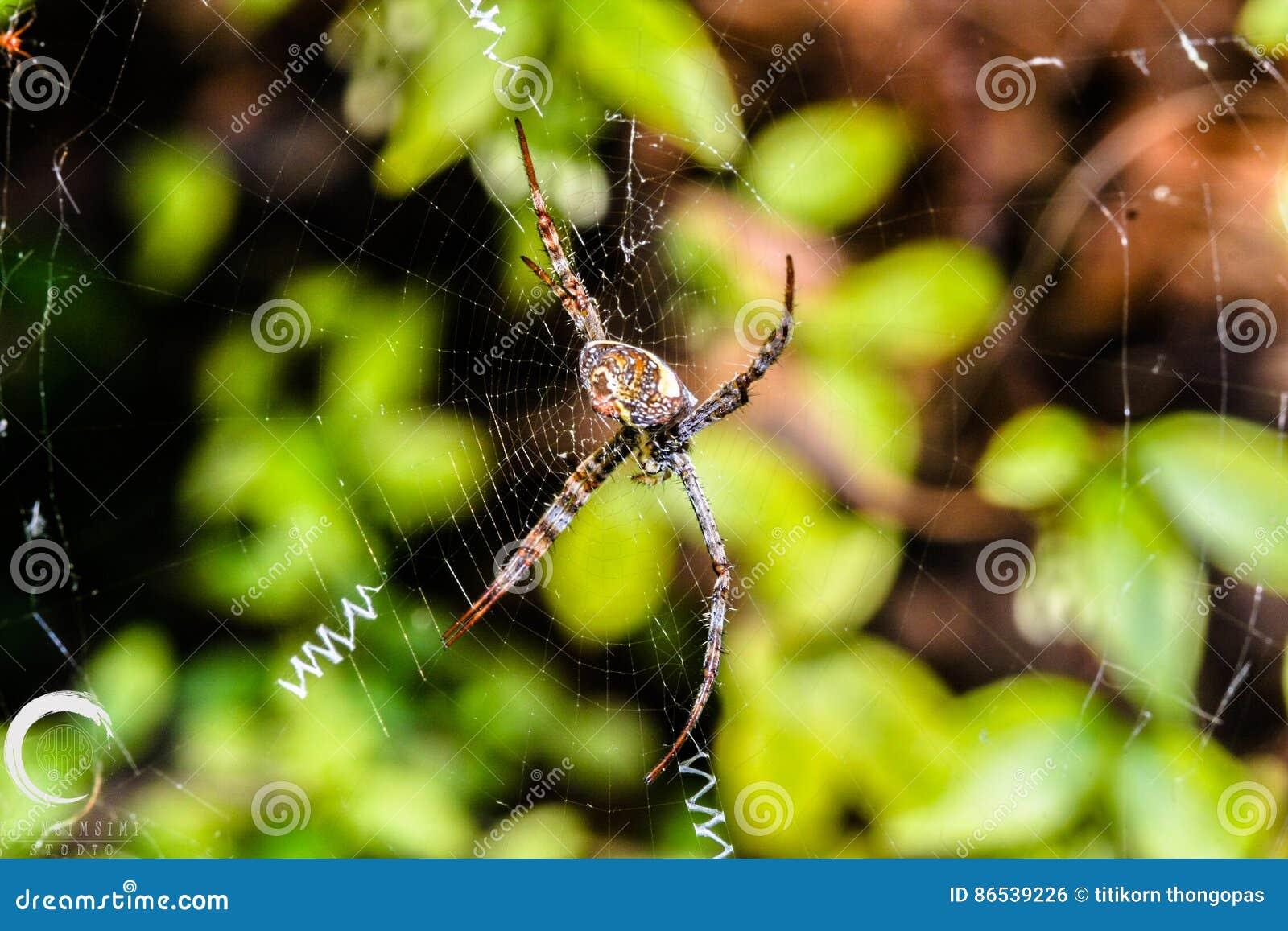 Araña y aventuras
