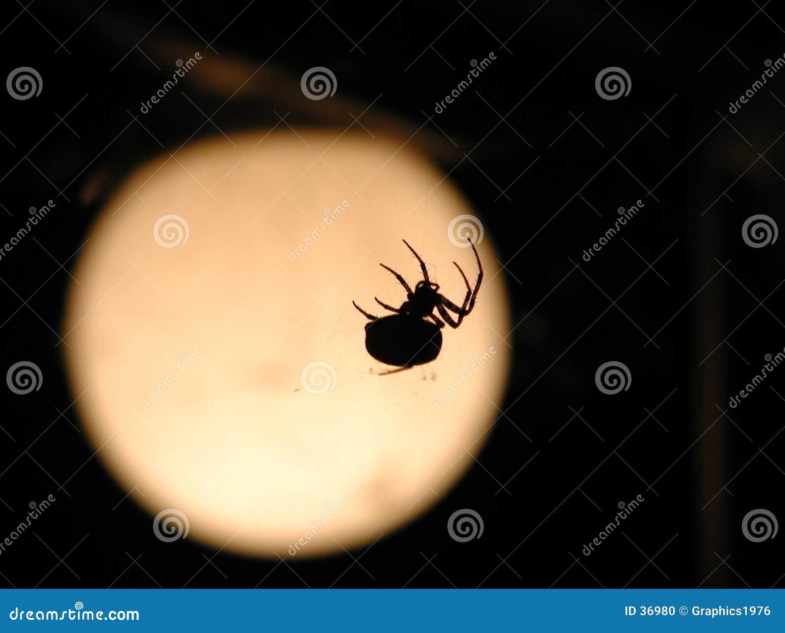 Download Araña y luna foto de archivo. Imagen de espeluznante, subida - 36980
