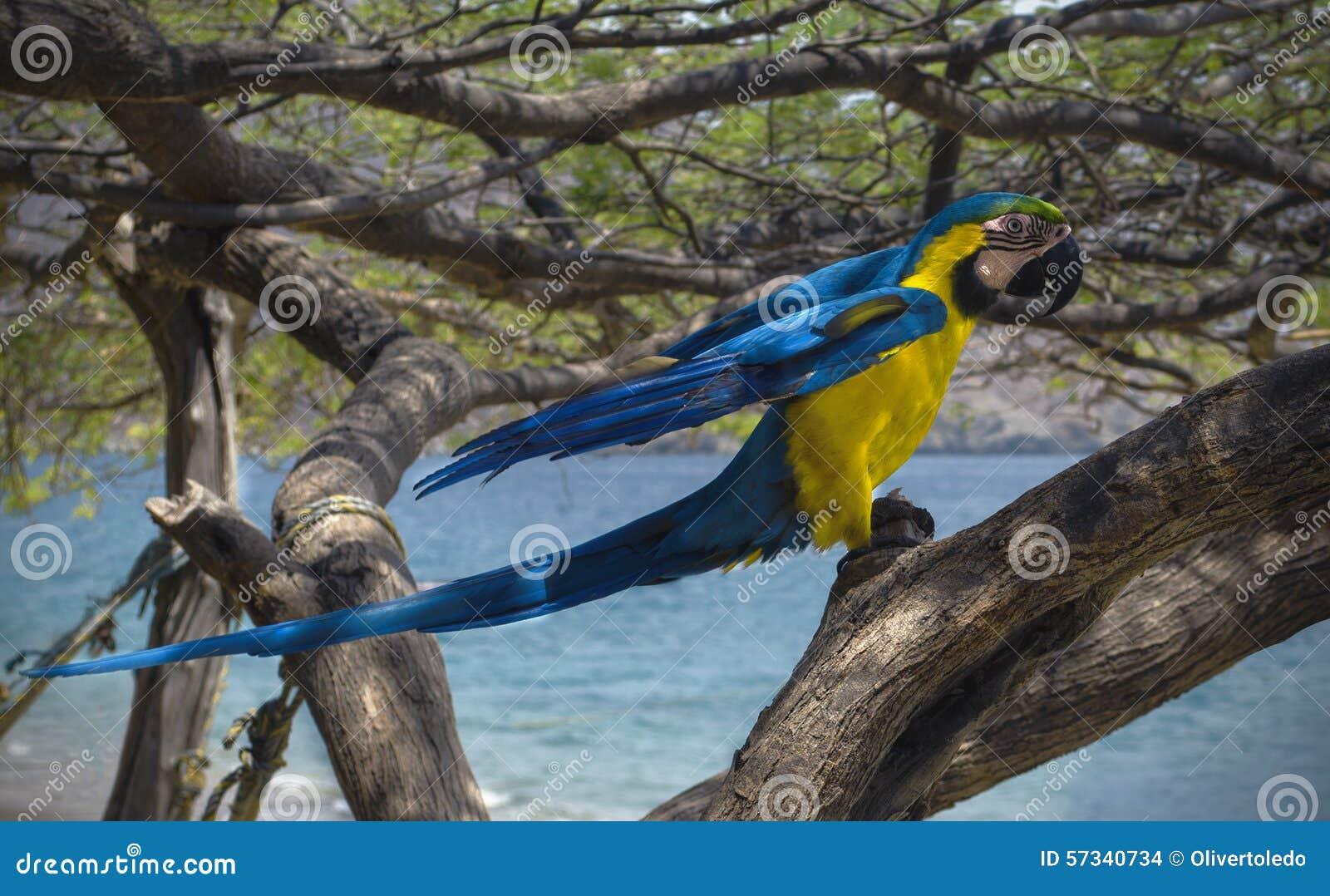 Ara på ett träd på stranden