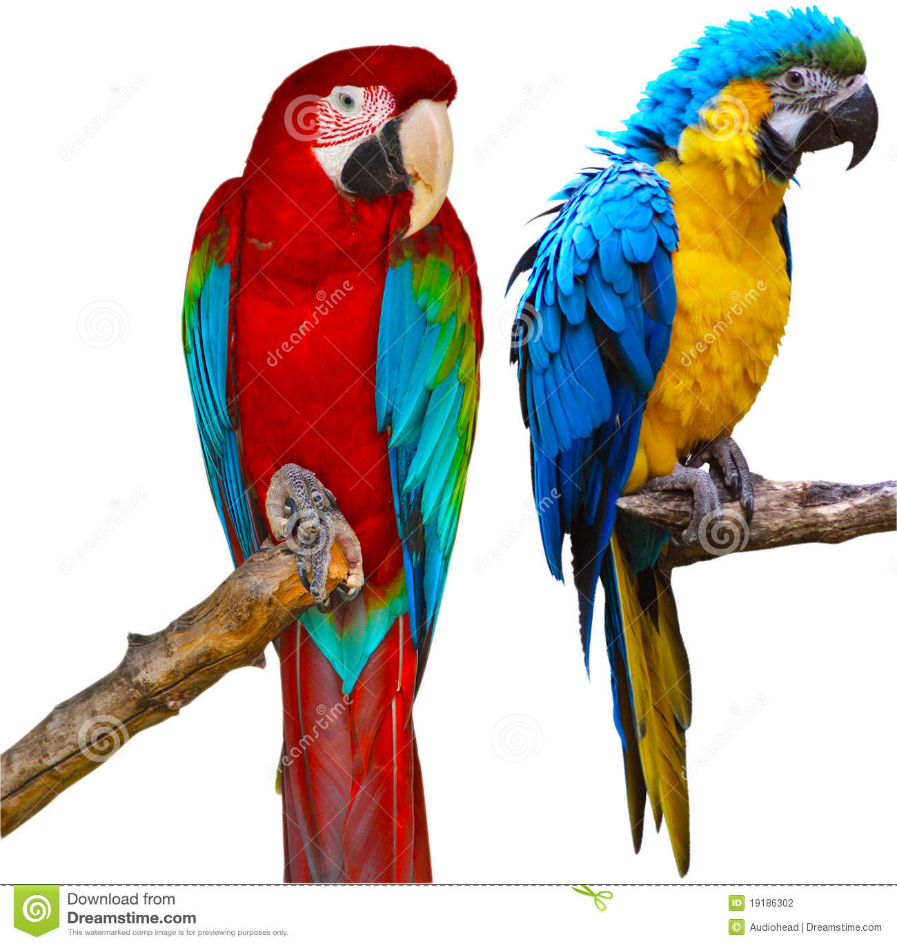 ara parrots stock photography image 19186302 Pink Macaw Light Blue Macaw