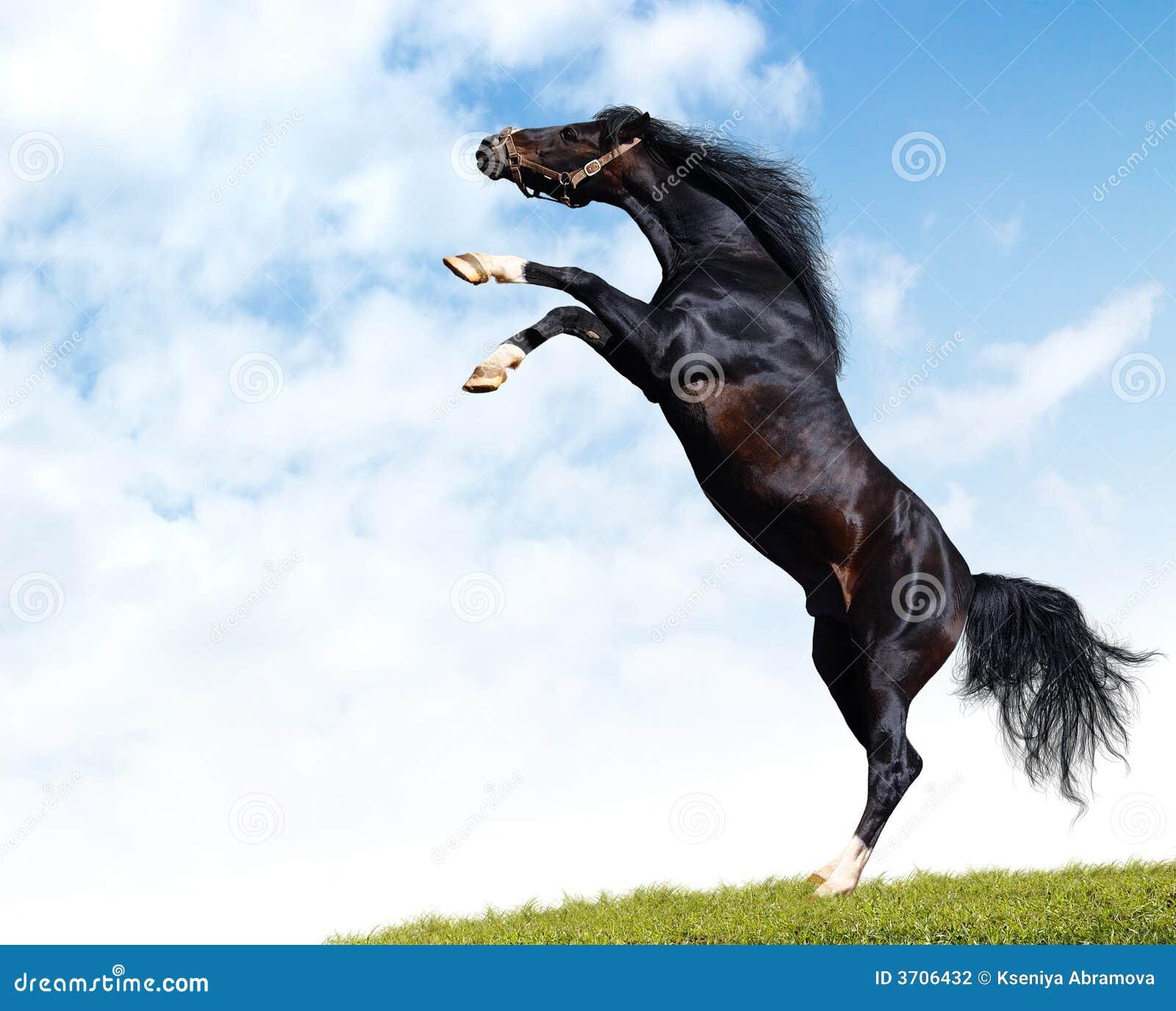 black stallion by selket47 - photo #24