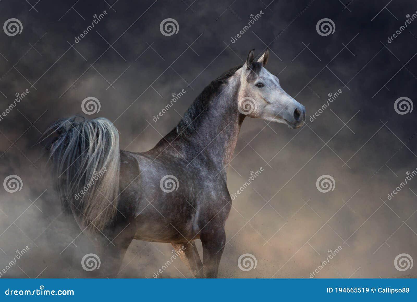 Arabian Horse Portrait Stock Image Image Of Desert 194665519