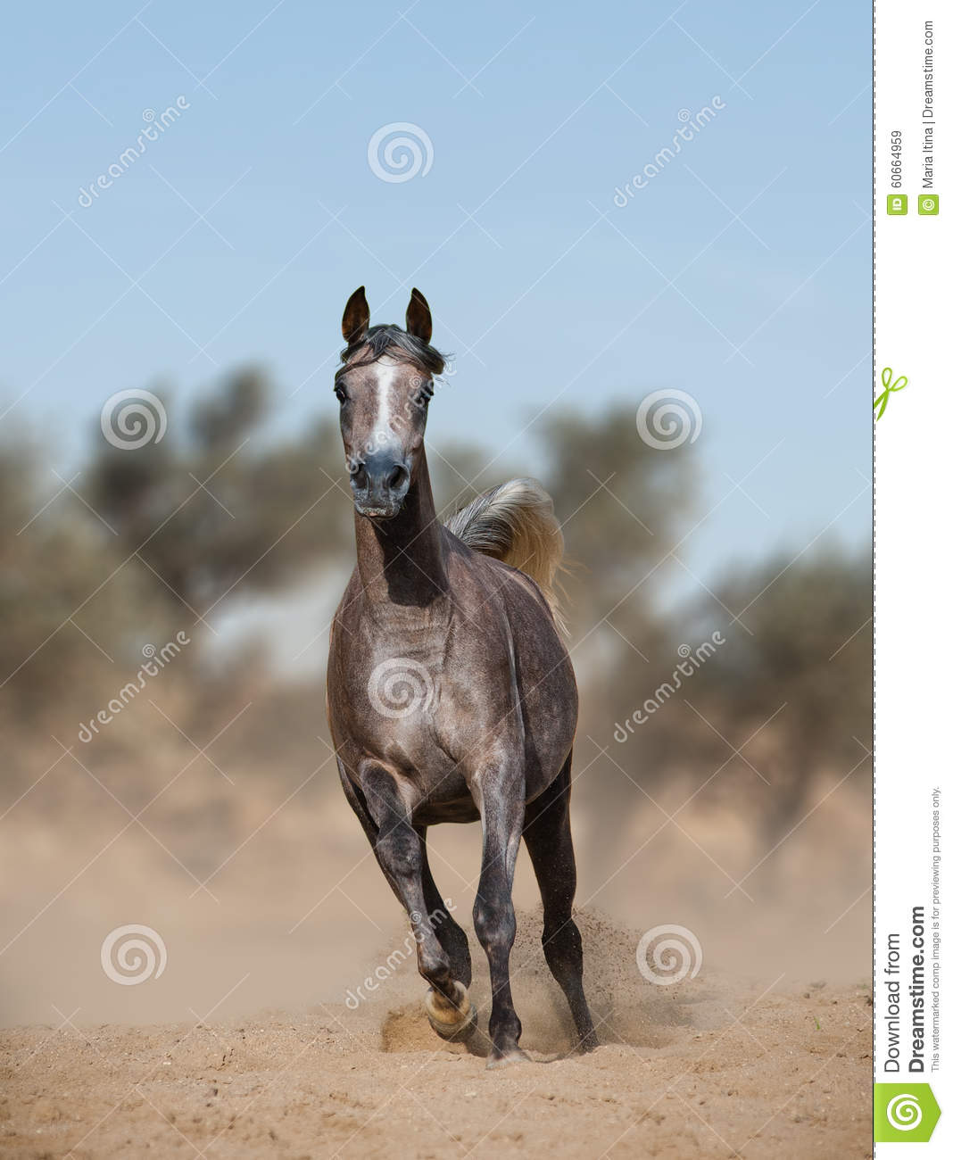Arabian horse in prairies