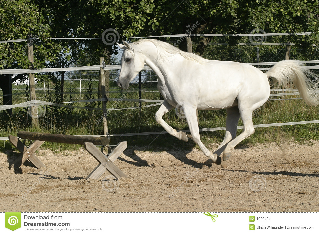 Arabian Mare Ready To Jump Stock Images - Image: 1020424