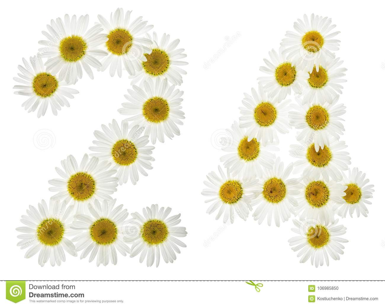 Arabic numeral 24, twenty four, from white flowers of chamomile, isolated on white background
