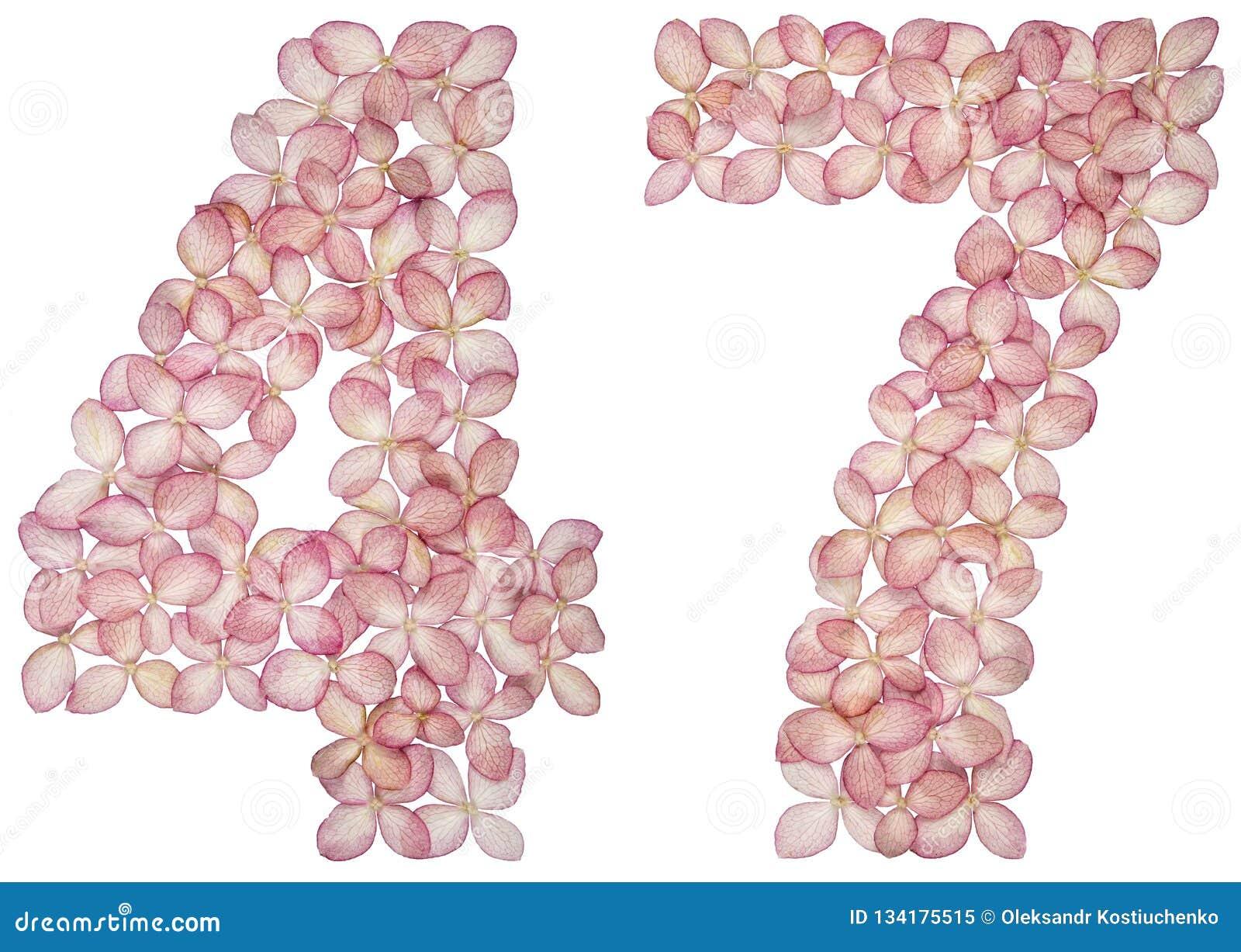 Arabski liczebnik 47, czterdzieści siedem, od kwiatów hortensja, odizolowywających na białym tle