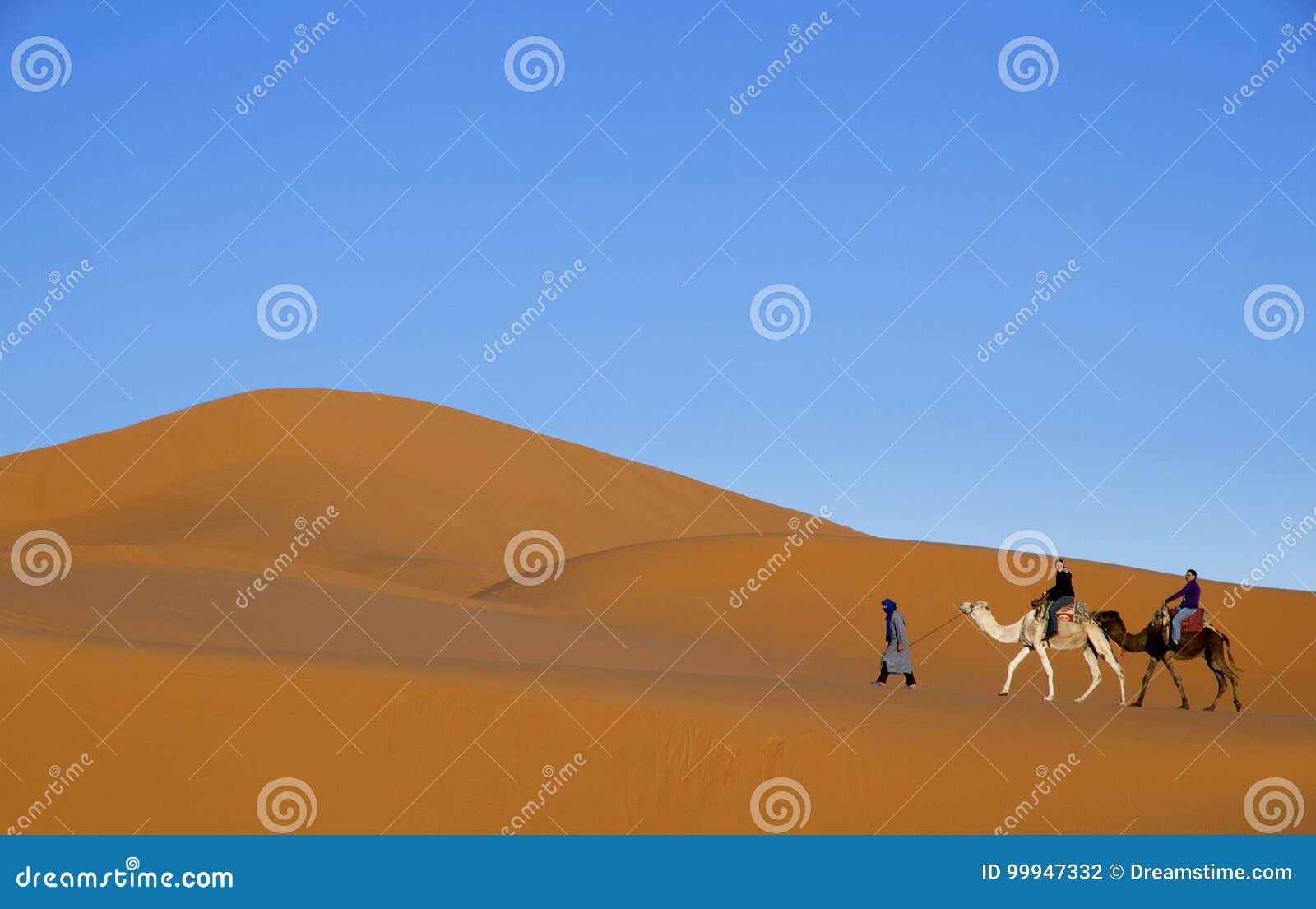 Arabskiego mężczyzna wiodący turyści na dwa wielbłądach wzdłuż pustynnych piasek diun z niebieskiego nieba tłem
