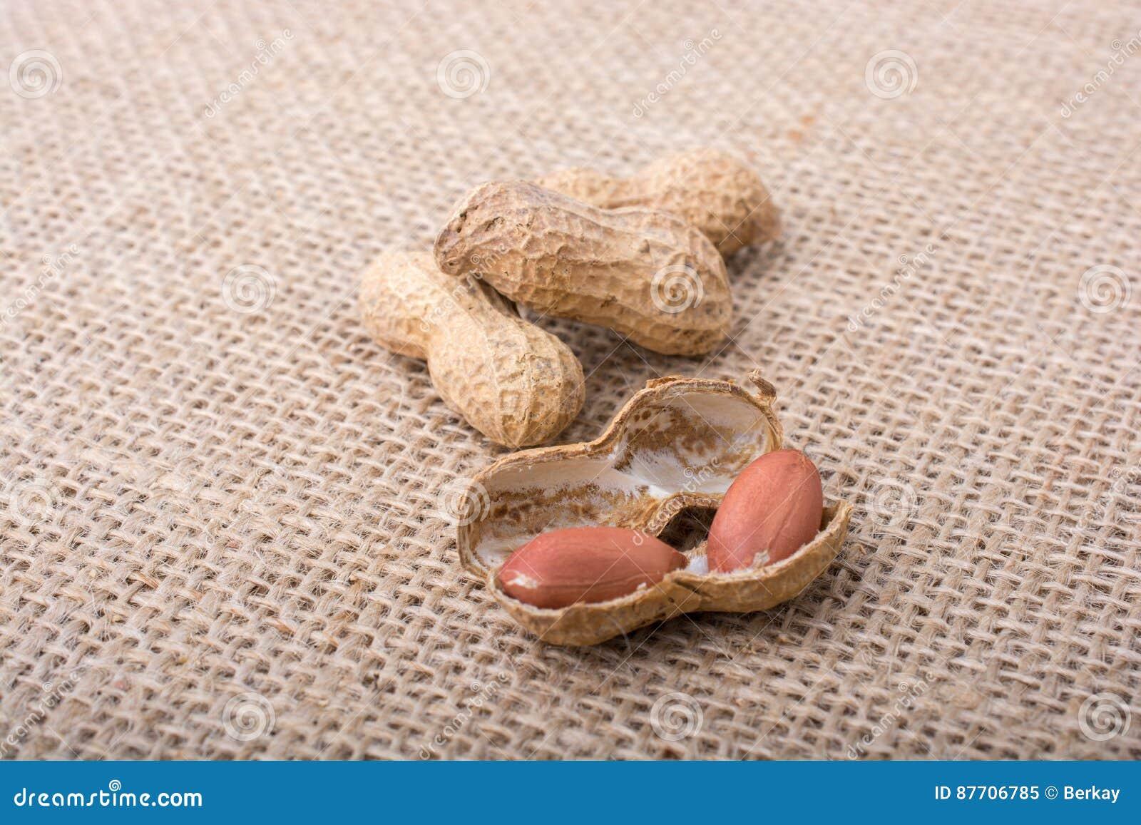 Arachides ouvertes criquées avec la coquille sur une toile de toile