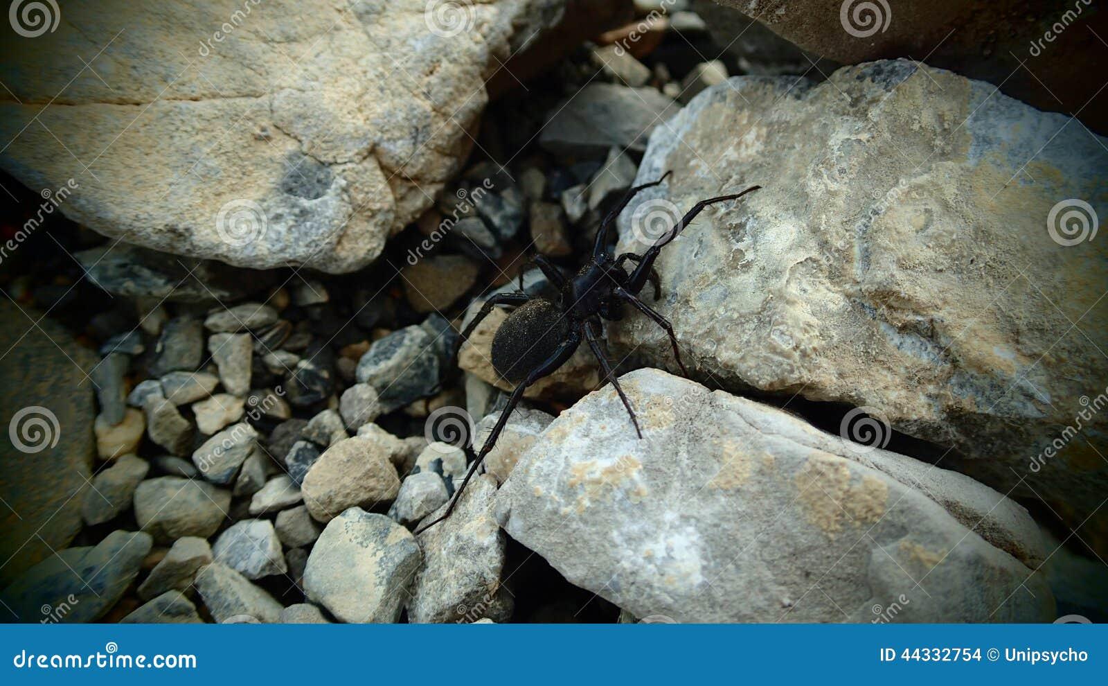Arachnide dans les montagnes