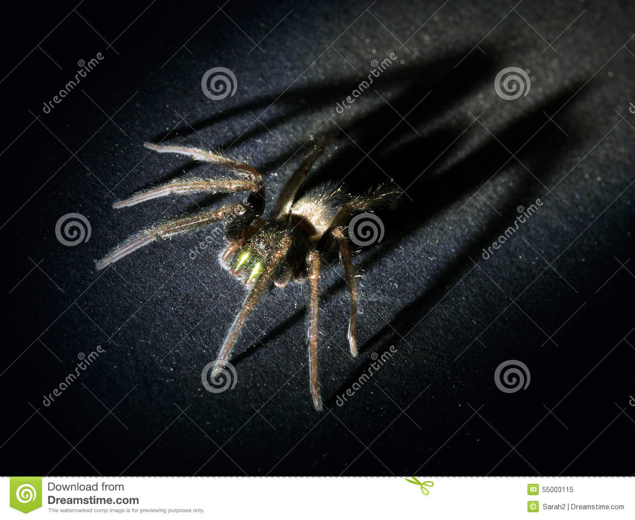 Consider, pictures of big huge hairy spiders