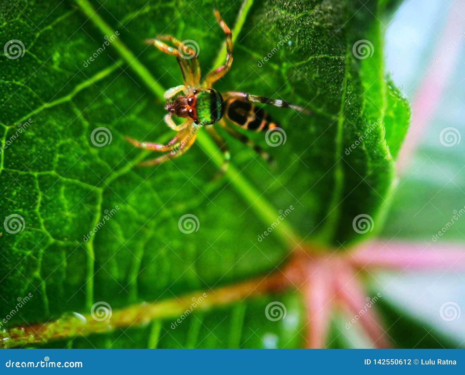 Araignée branchante verte Copiez l espace