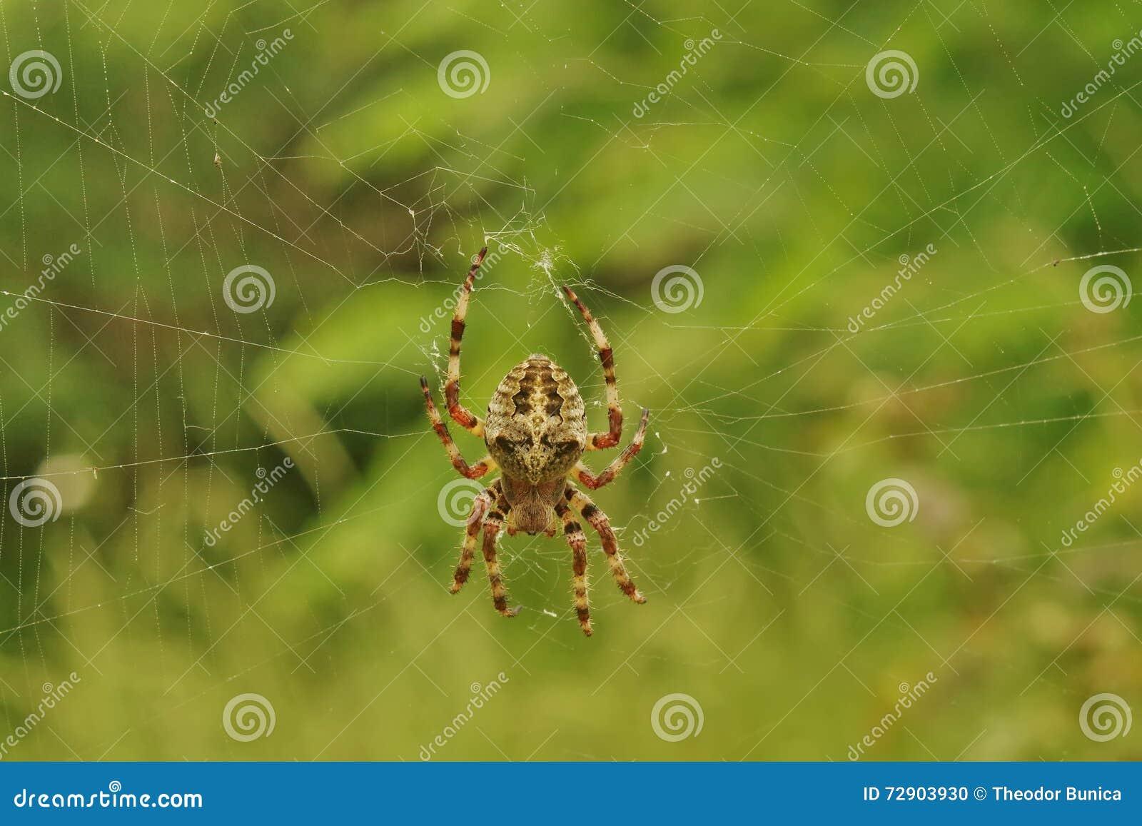Araignée croisée sur le Web