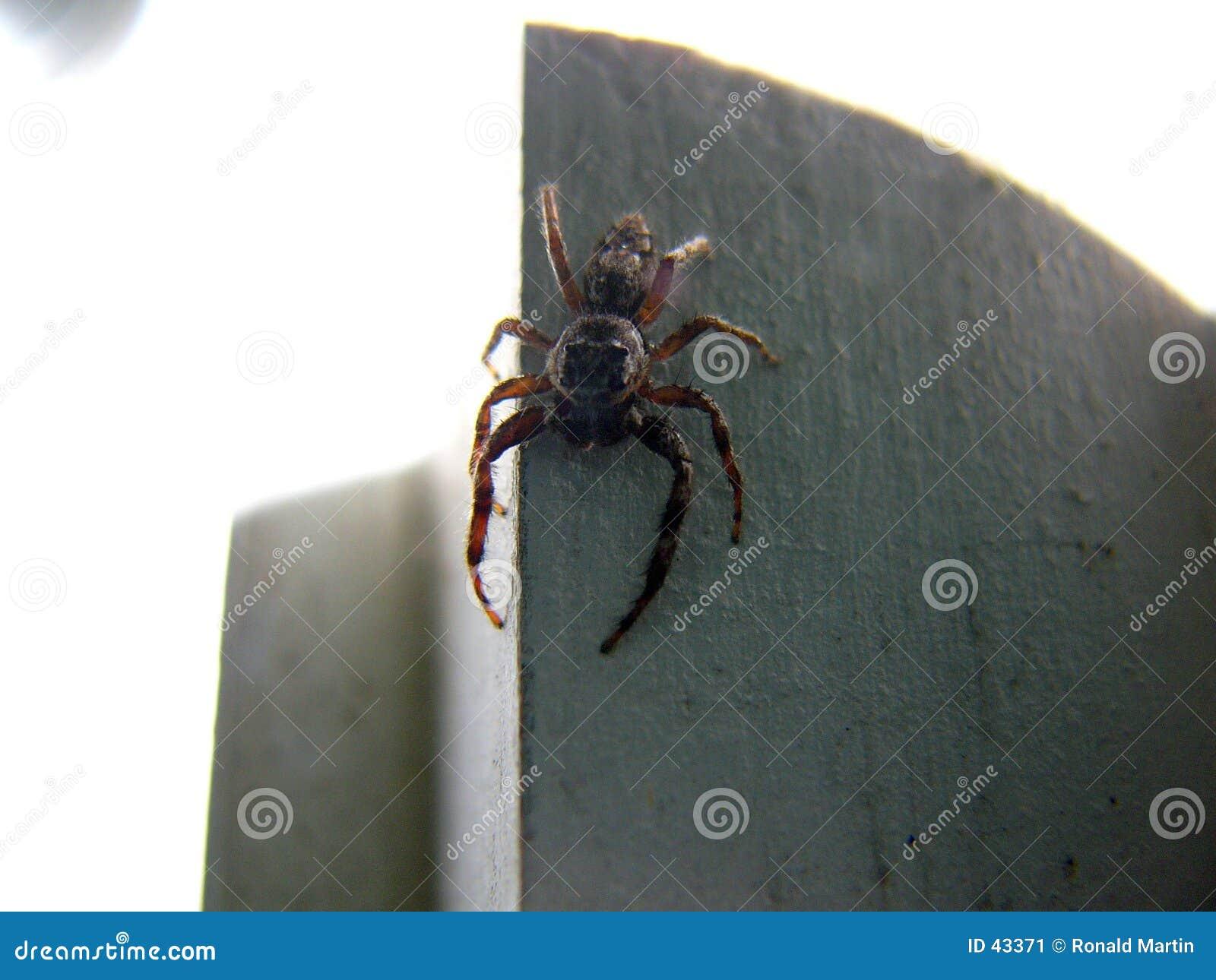 Araignée effrayante 2