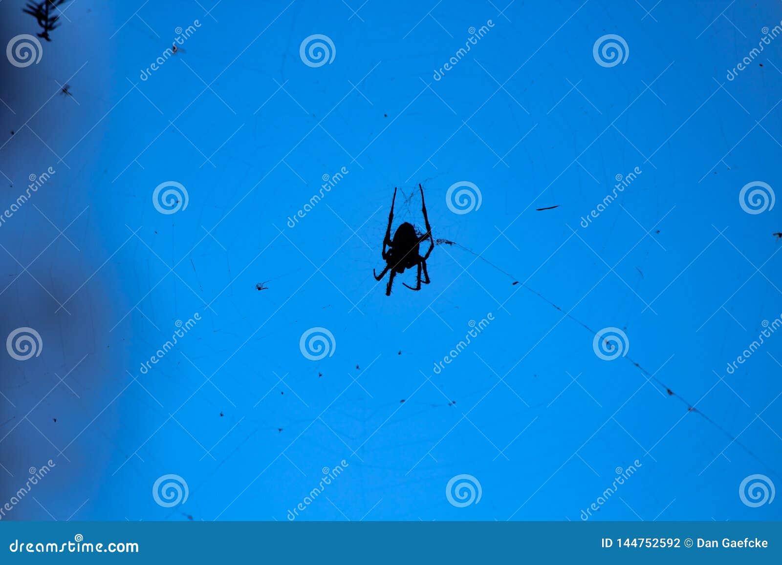 Araignée silhouettée tournant un Web