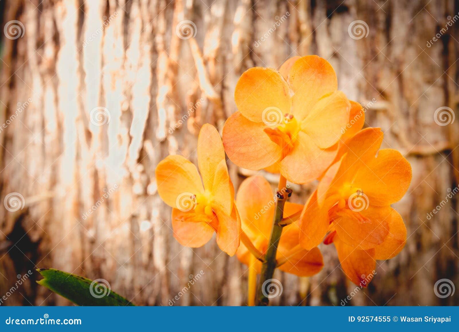 Arancia dell orchidea allo zoo esotico eccezionale in Tailandia