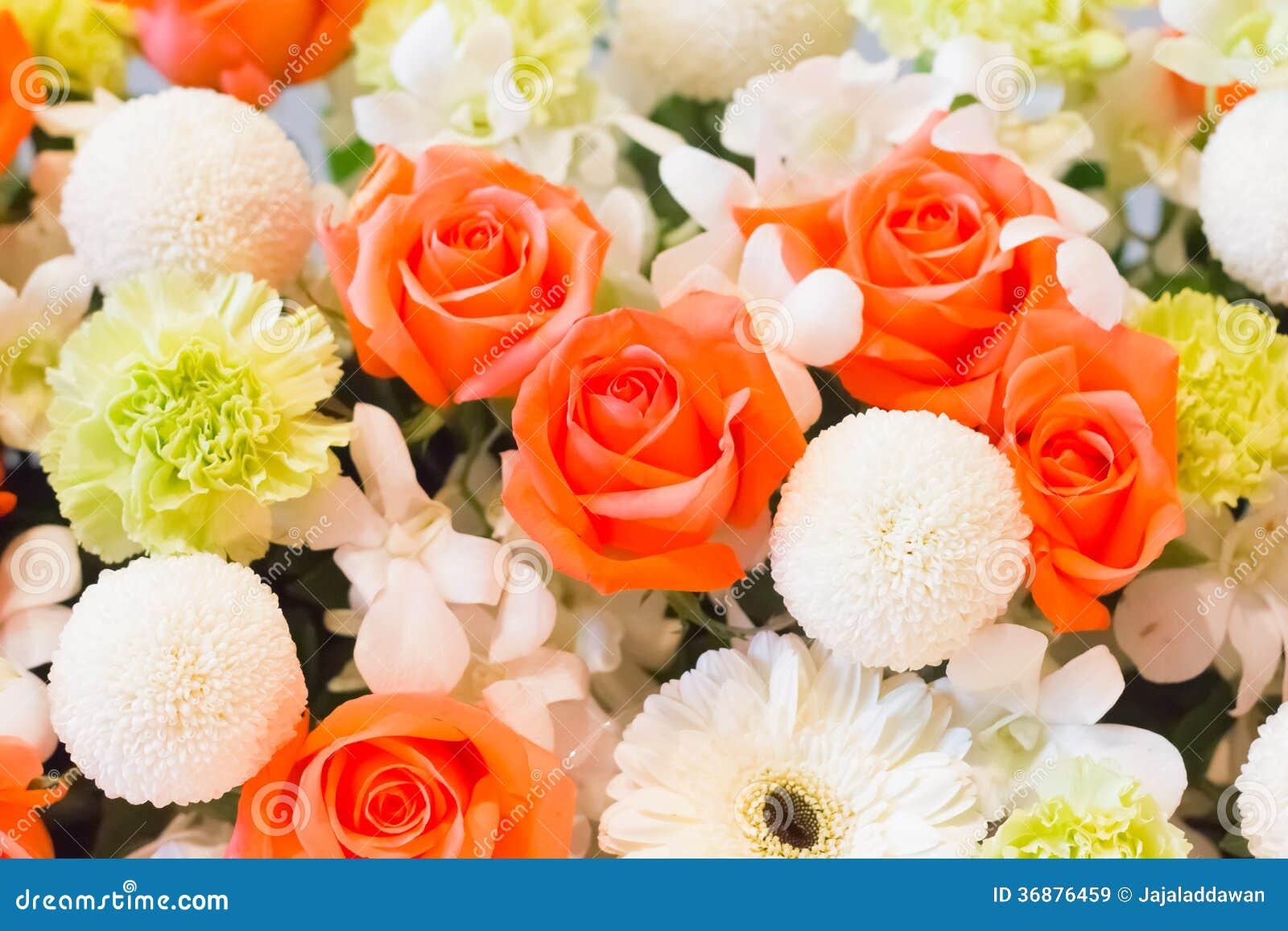 Download Arancia rosa ed orchidea immagine stock. Immagine di contesto - 36876459