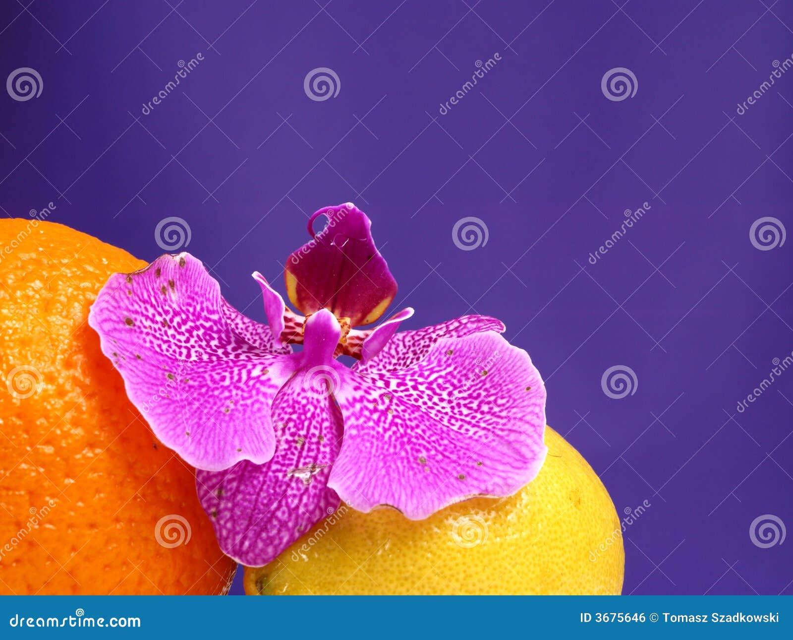 Download Arancio, Limone Ed Orchidea Dentellare Fotografia Stock - Immagine di vitamina, lifestyle: 3675646