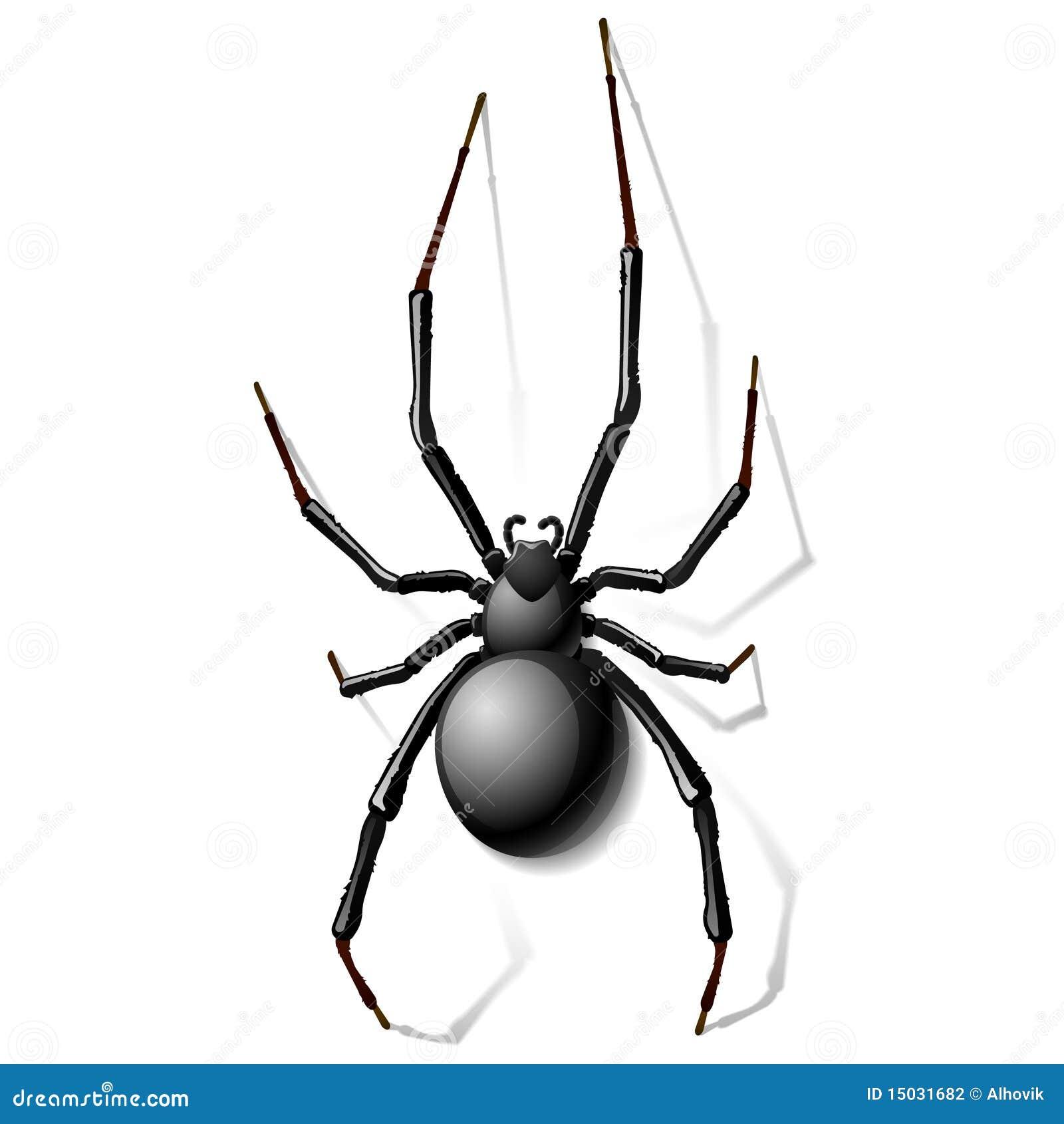 Aranha da viúva preta