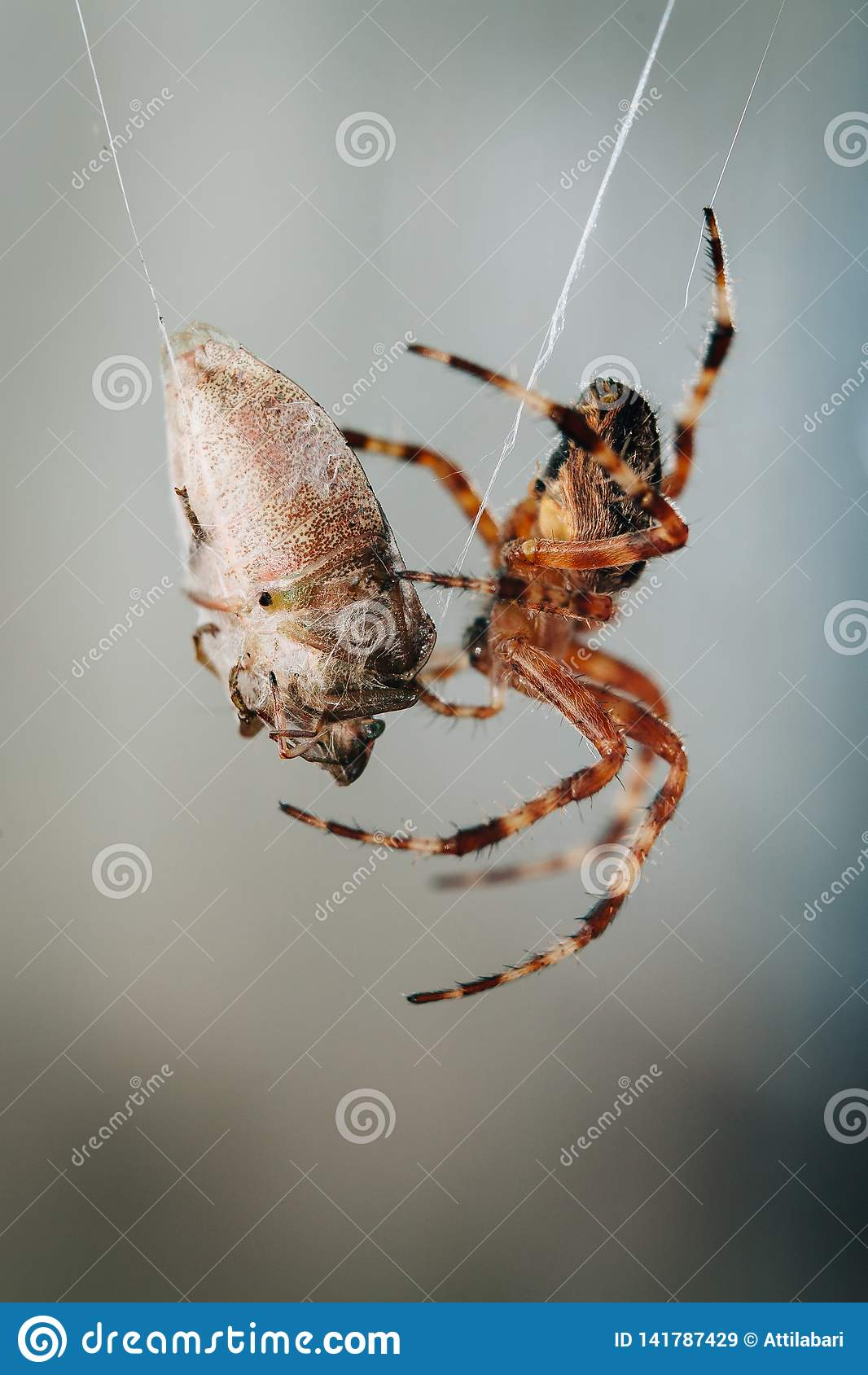 A aranha está comendo o erro prendido