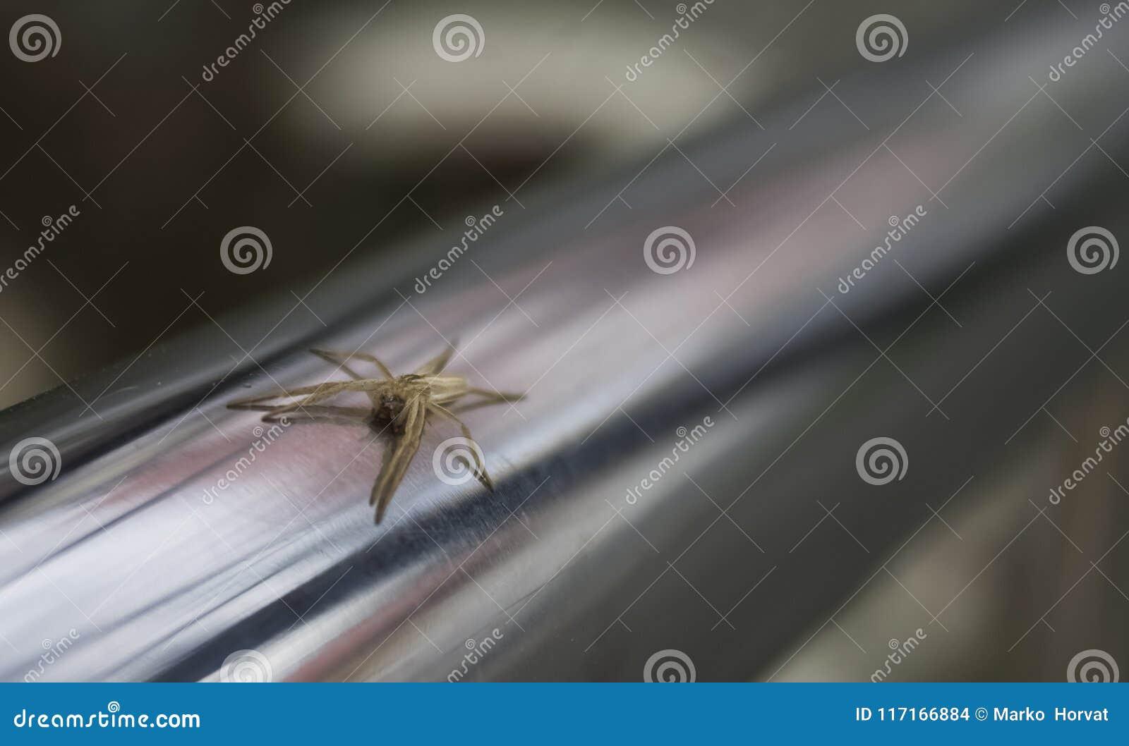 Aranha minúscula