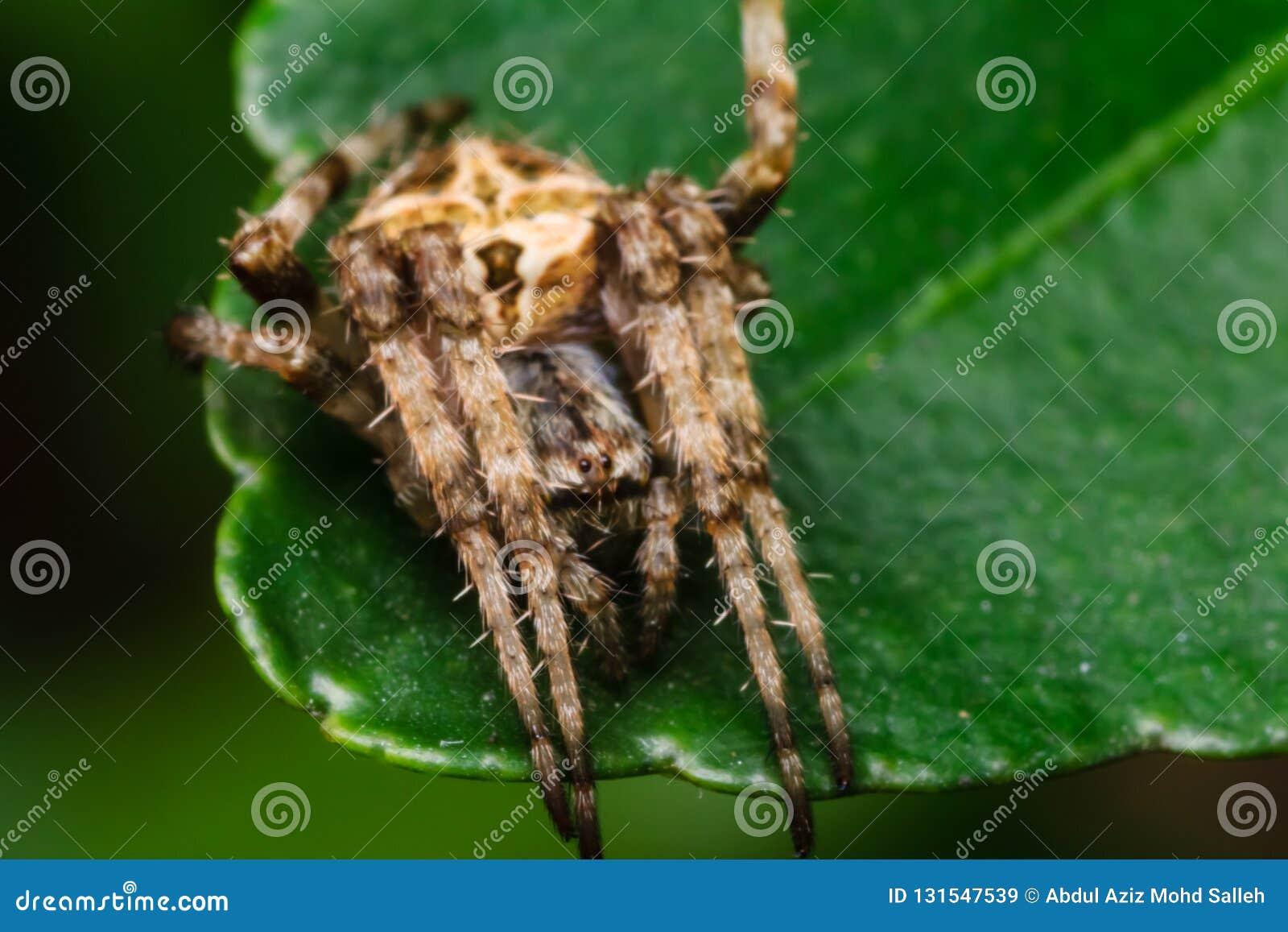 Aranha na natureza