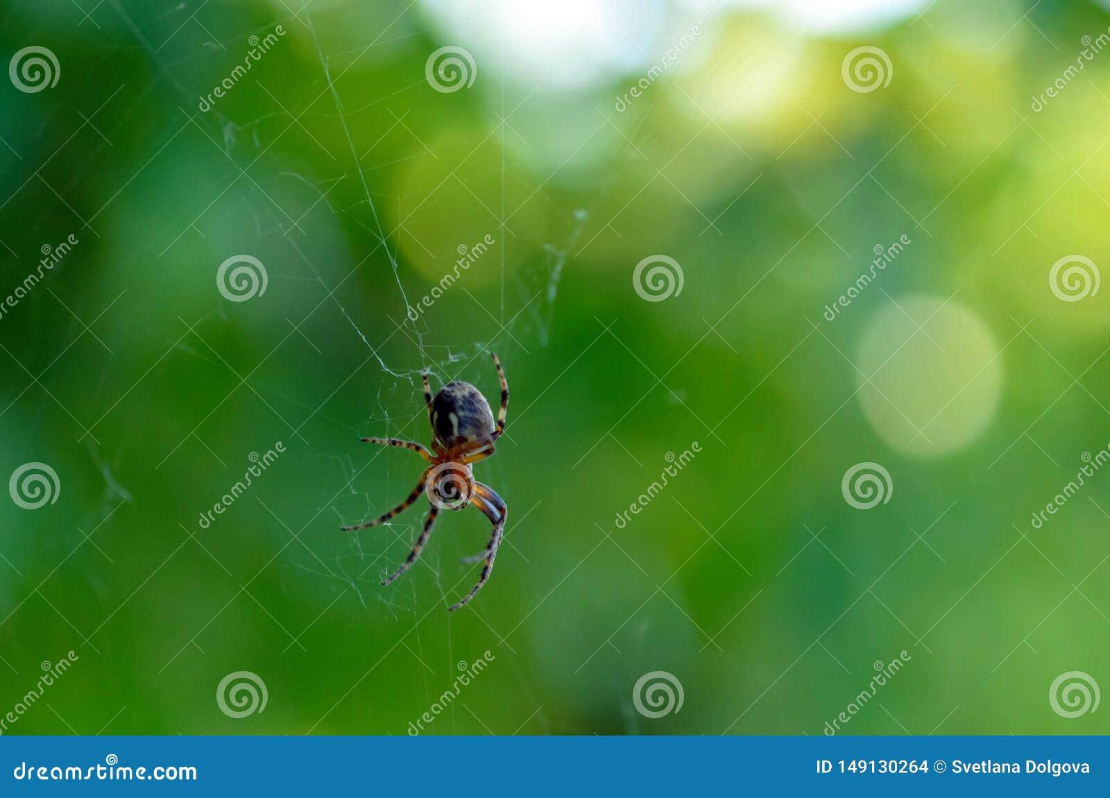 A aranha na Web