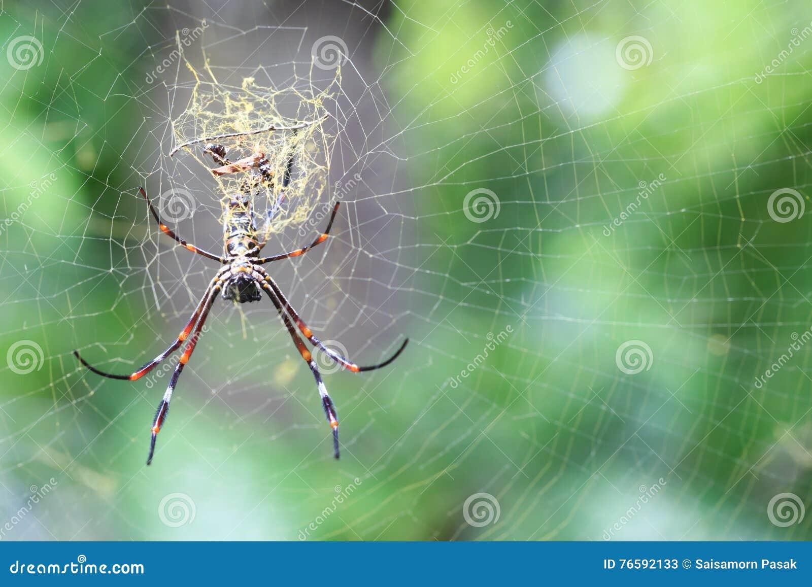 Aranha no spiderweb