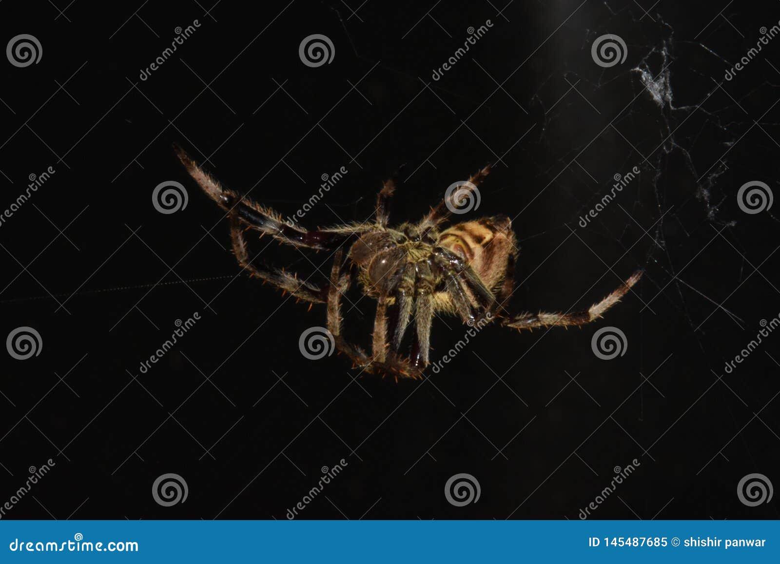 Aranha que pendura na Web