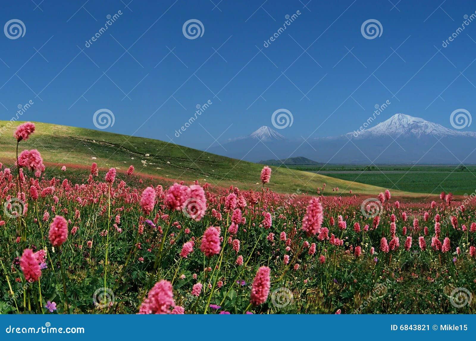 Ararat berg
