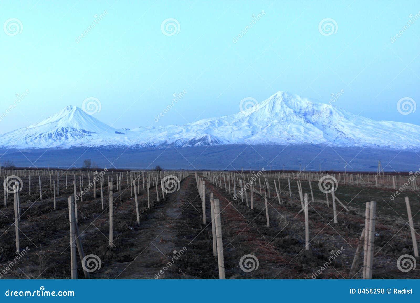 Ararat natt