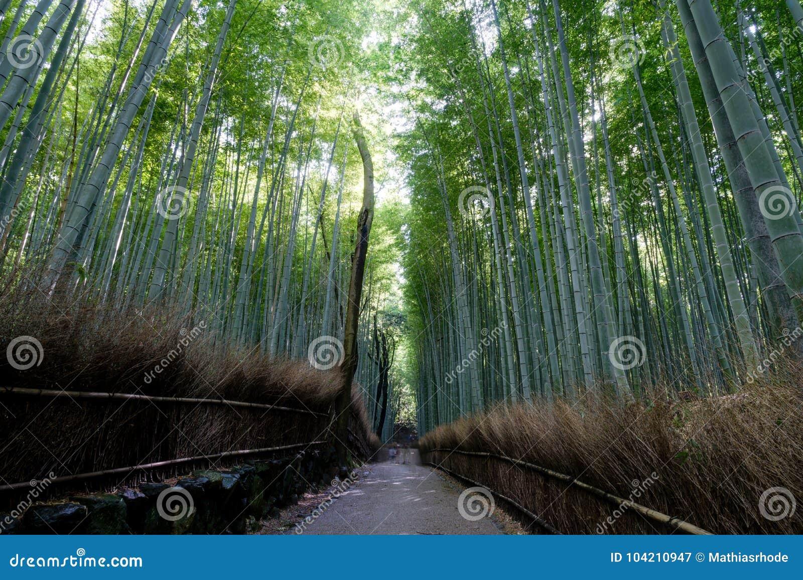 Arashiyama的,京都著名竹树丛