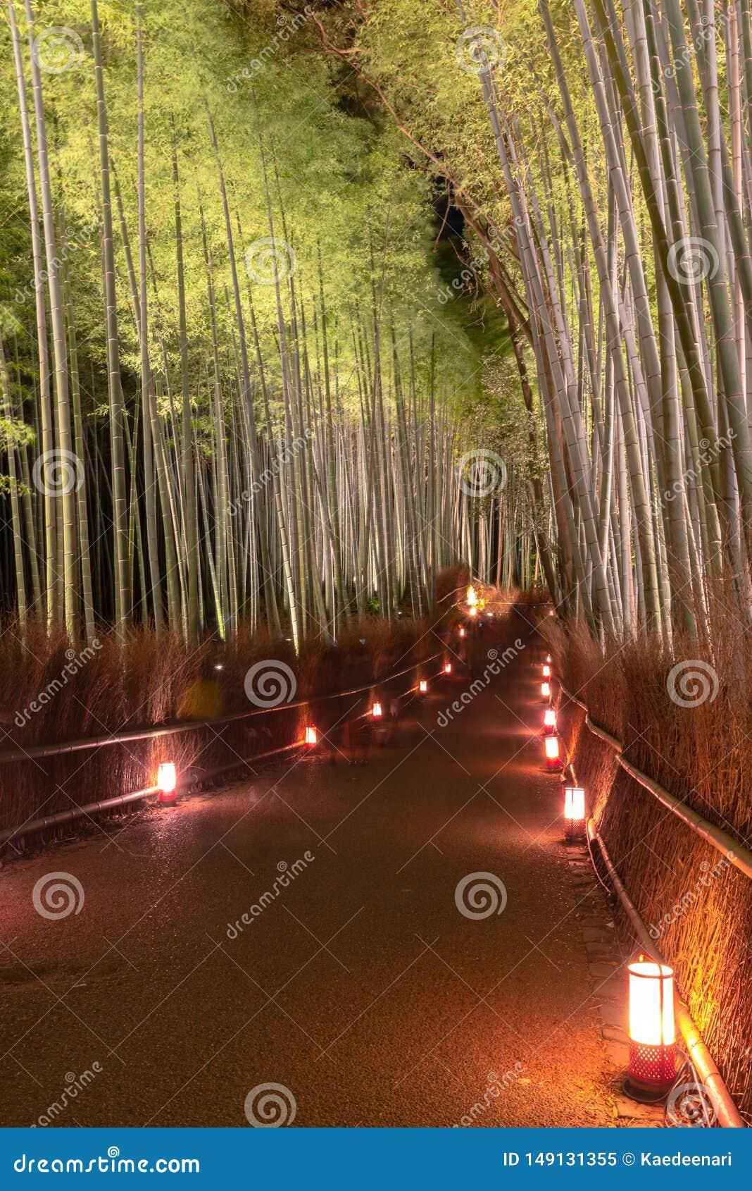 Arashiyama Bamboo Grove Zen garden light up at night