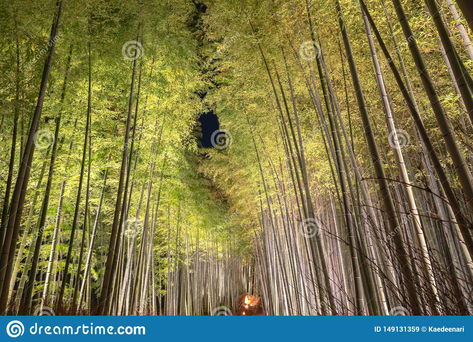 Arashiyama Bamboo Grove Zen garden light up at night