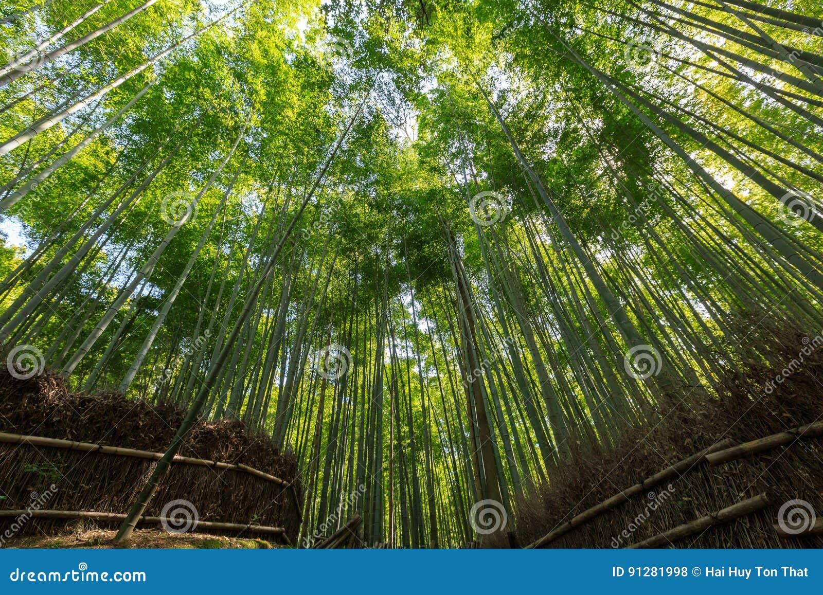 Arashiyama bambudunge