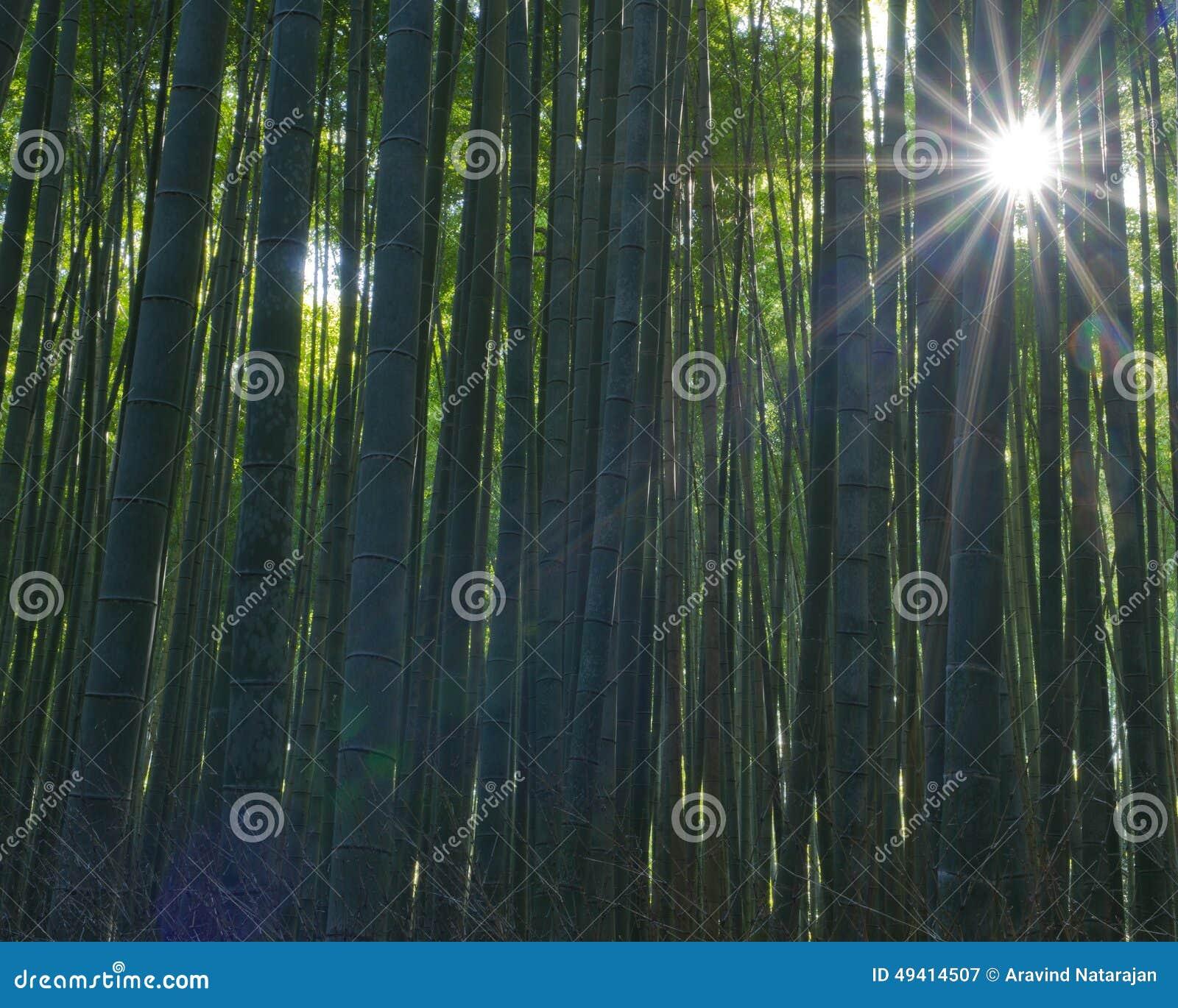 Download Arashiyama-Bambus Grove stockbild. Bild von asien, garten - 49414507