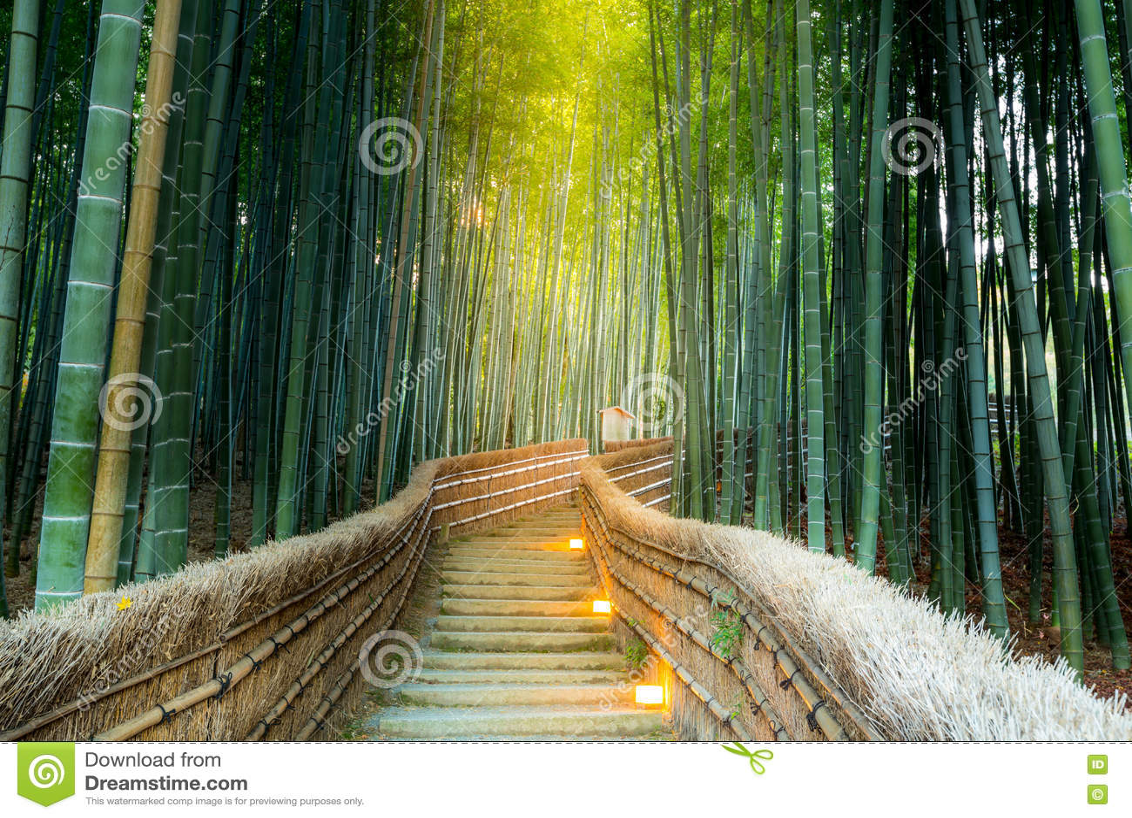 Arashiyama Bambuswald Stockfoto Bild Von Uberraschen 76034762