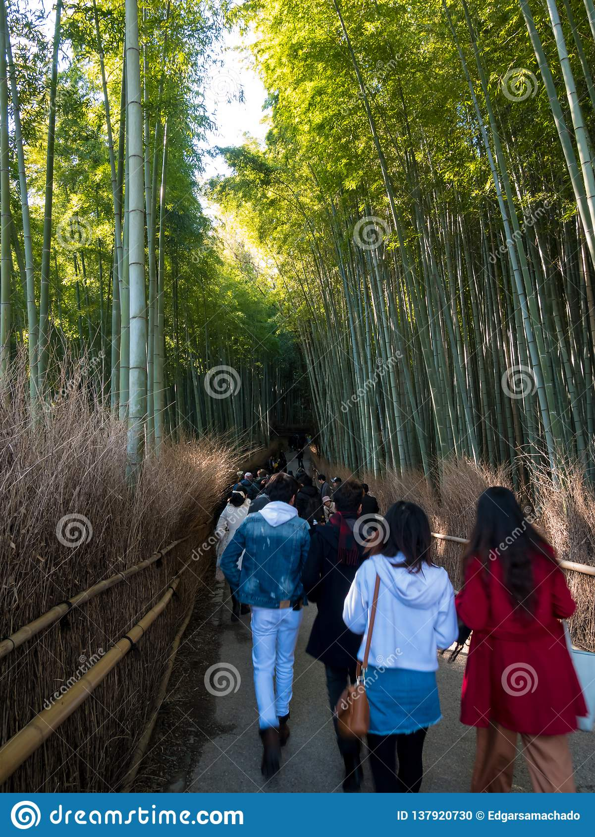 Tourist walking in Bamboo Forest
