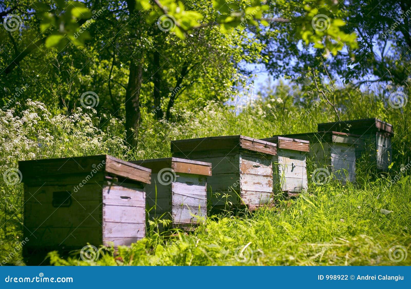 Arbeta i trädgården bikupar