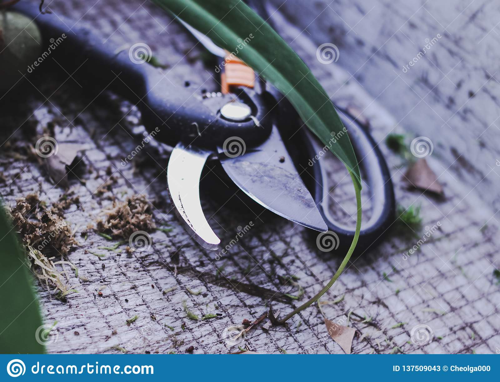 Arbeta i trädgården hjälpmedel skäraren, sax transplantera blommor i vår