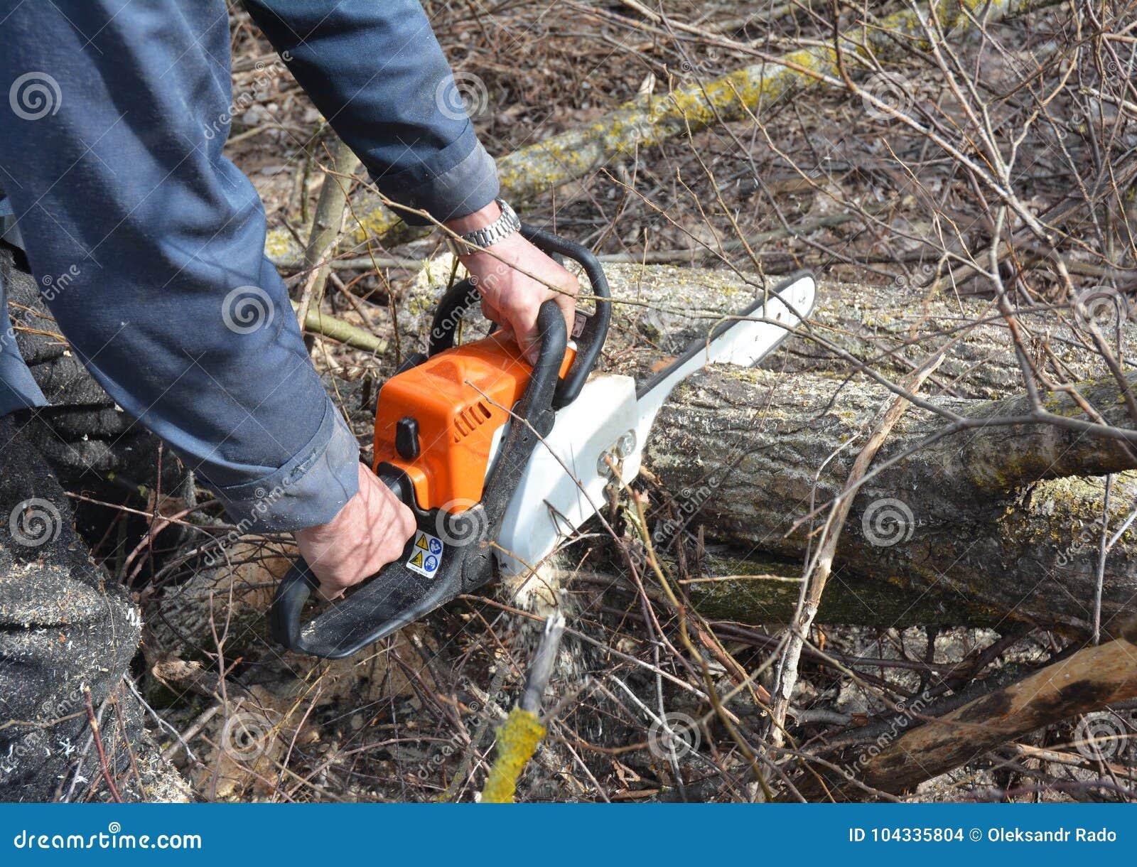 Arbetare med bensinchainsawen i Forest Tree Cutting Saw Mannen med bensinbensinkedjan såg att klippa för träd som var utomhus-