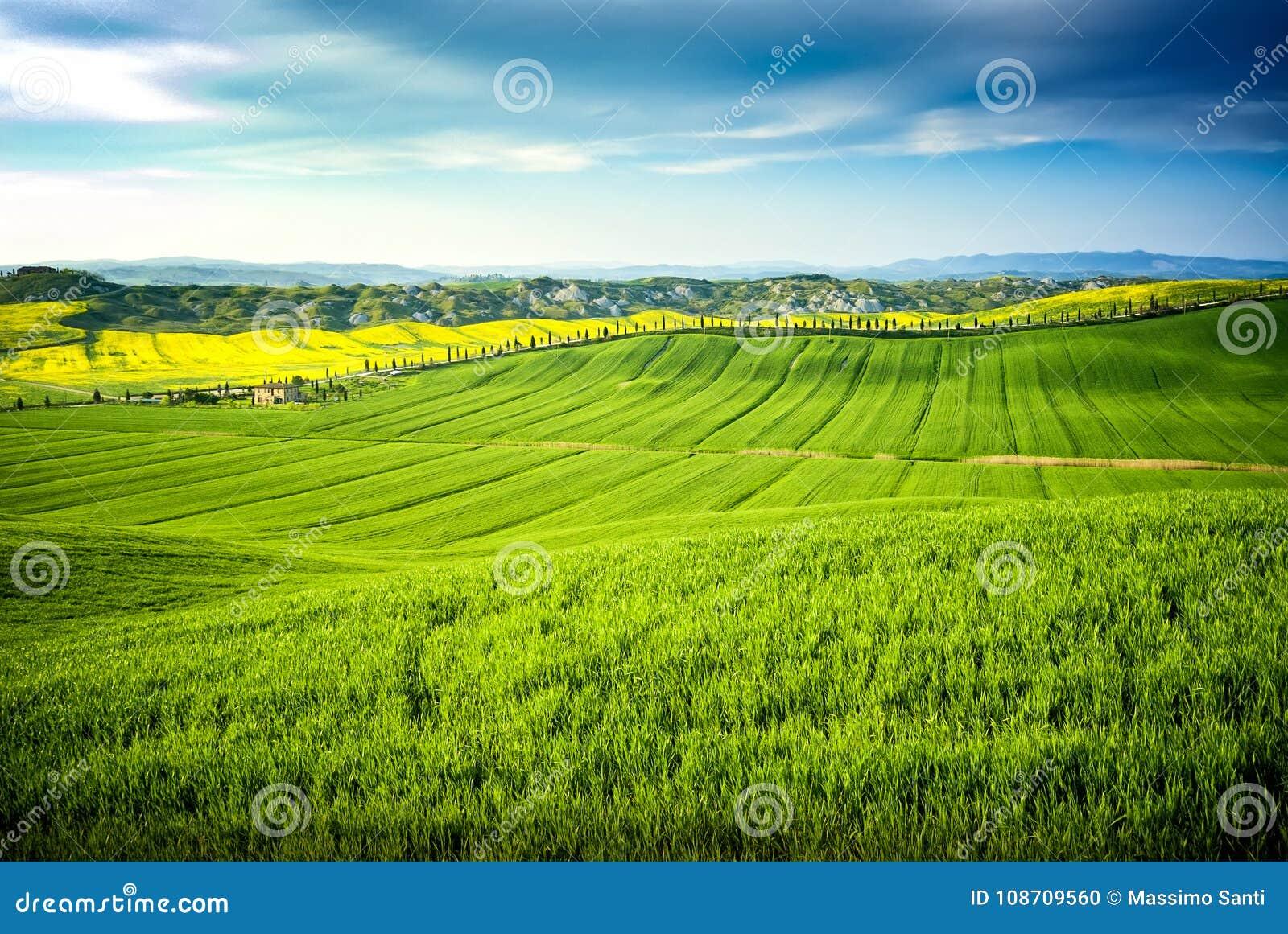 Fiori Gialli Toscana.Arbia Toscana Italia Di Val D Colline Coltivate Con Grano E