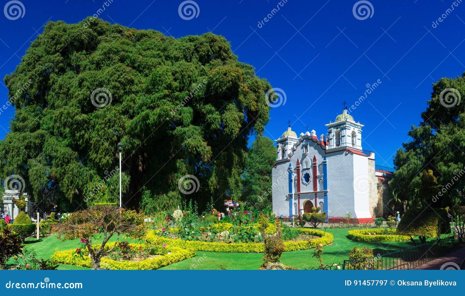 Arbol del Tule, árbol de ciprés de Montezuma en Tule Oaxaca, México