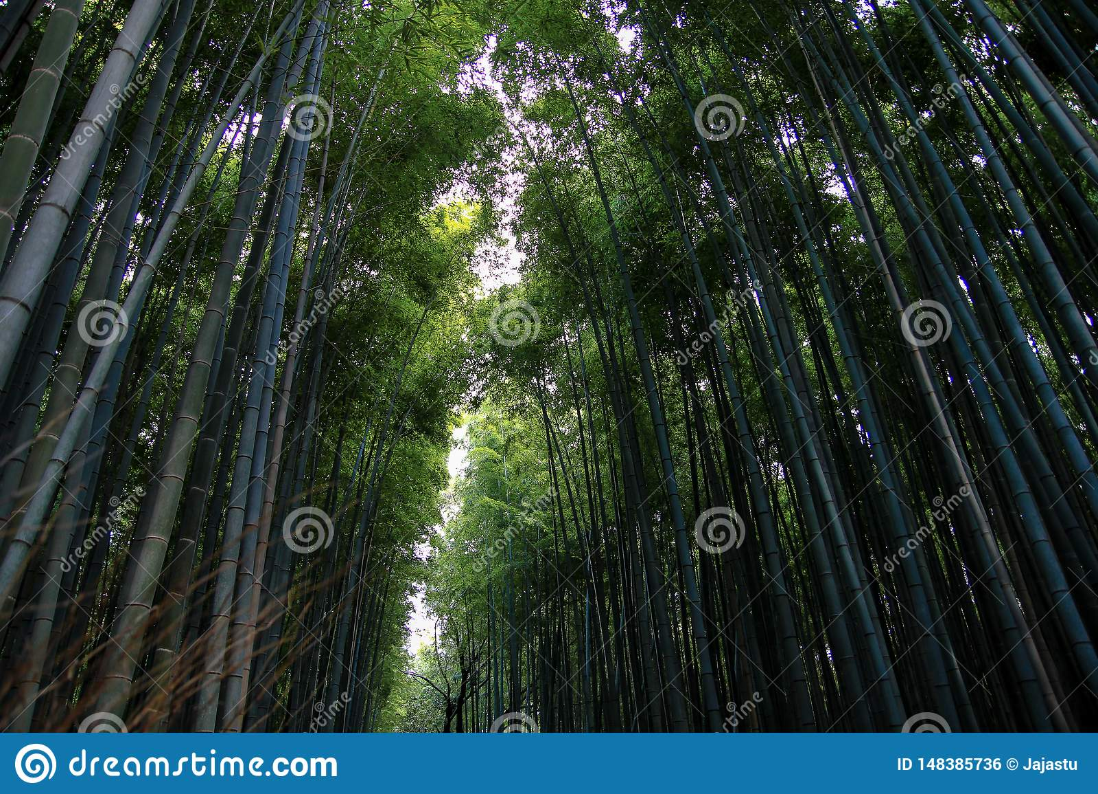 Arboleda de bamb? famosa de Arashiyama, Jap?n